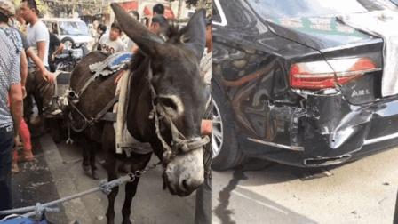 驴被狗咬受了惊 一脚踹?#20882;?#19975;豪车要赔10万元