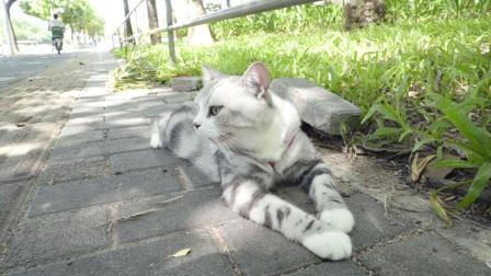 为了讲解遇到流浪猫要怎么办, 铲屎官将猫咪丢在路边进行角色扮演