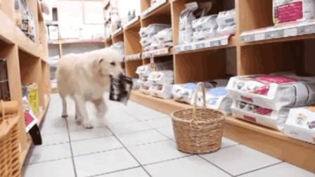 金毛可以自己拿着篮子, 带着钱去超市买东西