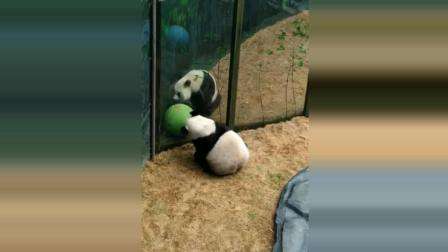 大熊猫妙音金虎: 我负责转, 你负责看就行了