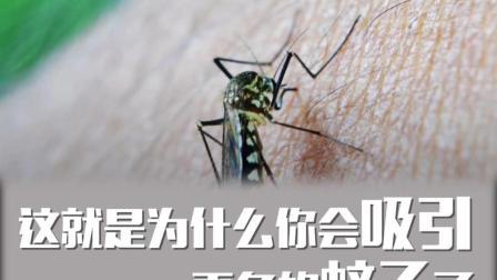 自带招蚊体质? 蚊子为什么只咬你不咬他?