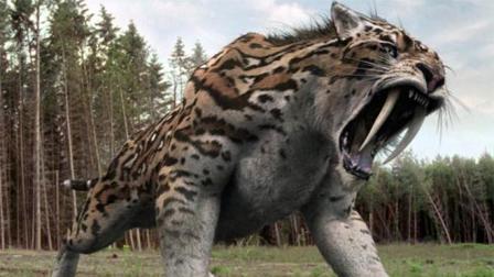 剑齿虎是如何灭绝的? 看完算是清楚了!