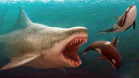 第170期 巨齿鲨现身人类沦为大餐