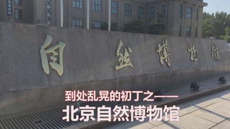 初丁带你逛北京自然博物馆