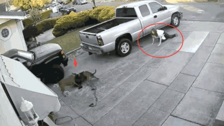 女子牵着两条比特犬从这走过, 监控拍下失控的画