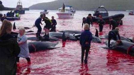 8斗传媒 丹麦法罗群岛鲸鱼鲜血染红海湾