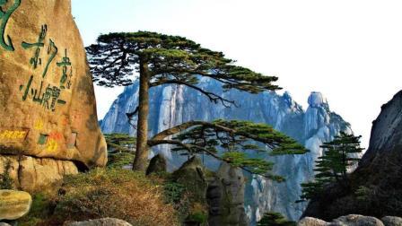黄山标志迎客松, 100多年仍保持同一造型, 网友: 难道是棵假树?