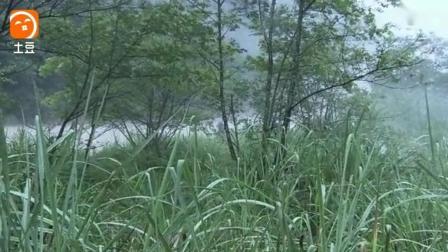 日军败给农民率大部队反扑以为稳赢, 不料在树林里被虐更惨