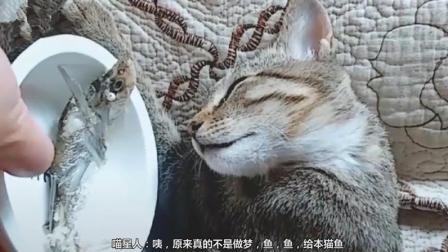 原来真的不是在做梦, 是小鱼干把本猫唤醒了