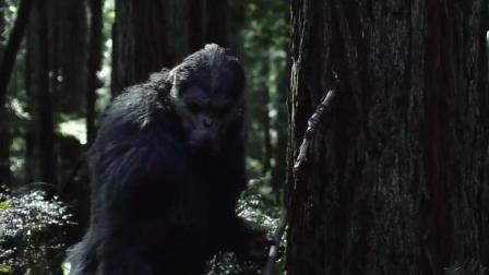 一只长得很像猩猩的怪物, 它的名字叫大脚怪, 传说里的存在