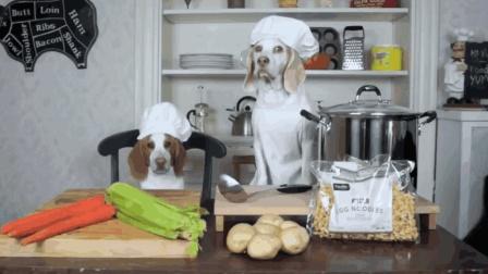 这两只狗狗厉害了, 当起大厨来了, 还有模有样的做起了病号餐