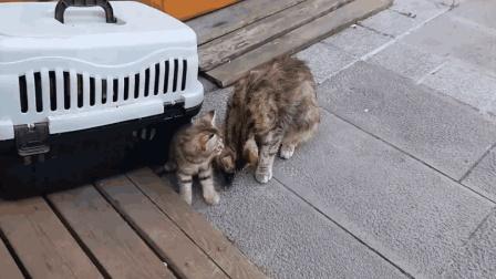 这么调皮的小猫崽崽, 猫妈妈表示好无奈呀! 熊孩子好难养啊!