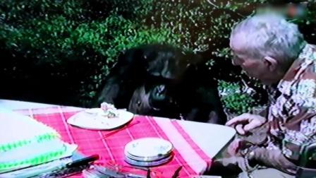 男子把一岁的猩猩夹带在腋下上了飞机,飞机起飞前都没人发现!