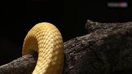 其实蛇对人类还是有贡献的,不然鼠患会很严重!