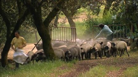 猪的数量超过人口, 西班牙环境不堪重负