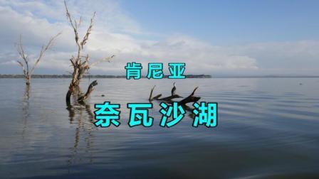 肯尼亚奈瓦沙湖