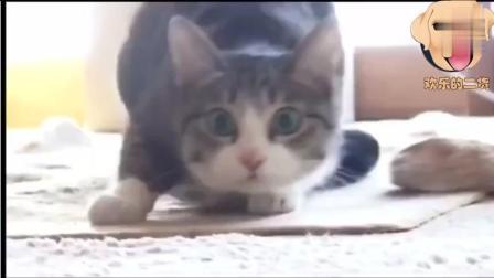反正这猫太够怪了, 搞笑动物短片