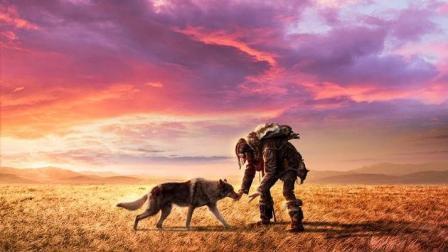 """《阿尔法》""""狼伴归途""""版预告 野外遇狼求生正确姿势"""