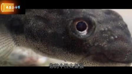梦见鱼是什么意思, 梦见鱼好吗