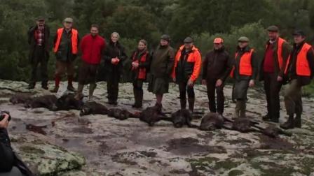 獵奇 第一百四十三集  去法国私人林场体验打野猪--每人一只带回家!