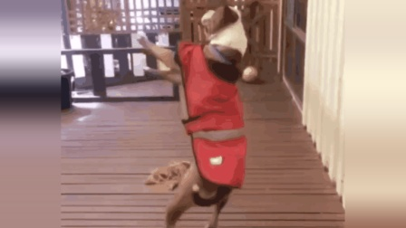 绝地搞笑的狗狗, 把你们的快乐, 建立在狗狗的痛苦之上