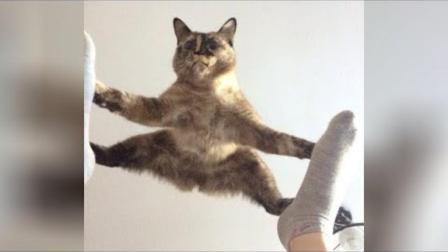 猫猫搞笑大合集视频!你能忍住多久不笑