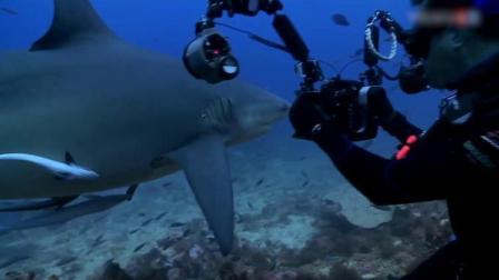 揭秘鲨鱼是怎么拍出来的,摄影师离鲨鱼这么近,还是食人鲨鱼!