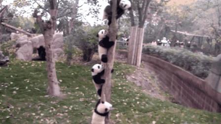 """这棵树同时长出了4只""""熊猫果"""", 虽不能吃, 但能治愈心灵"""