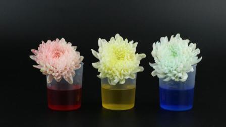 神奇的鲜花换装实验, 一起来给花朵染上颜色吧