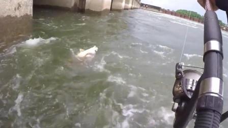水流越大的地方, 水下的鱼就越大, 钓鱼就得找这种地方钓