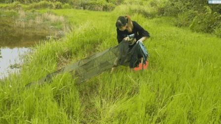 农村姑娘收地笼, 发现50元一斤的河鱼, 现在很稀有, 你见过吗?