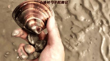 大贝壳摆在沙滩上? 大退潮赶海文蛤、毛蚶, 青蟹、海螺、带子海鲜太多