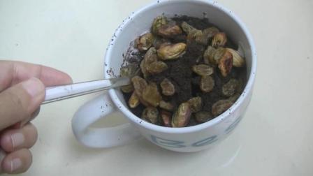 美食食谱: 教你水果盆栽简单的做法! 营养健康、老人小孩都爱吃!