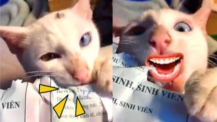 老师, 我的暑假作业被猫吃了!