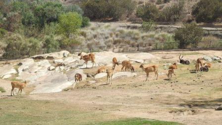 圣地亚哥野生动物园游记