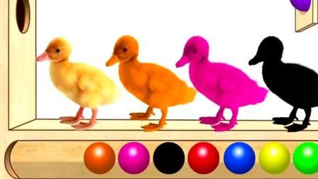 育儿英语启蒙早教, 木板上的小鸭子弹过小球变彩色!