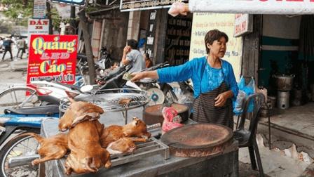 """越南狗肉市场, 当地人的""""美食""""天堂, 20万流浪狗的地狱!"""