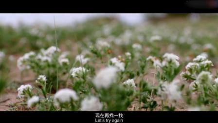 最美中国第二季:干旱的天气下,水草丰茂的草原不再是随处可见