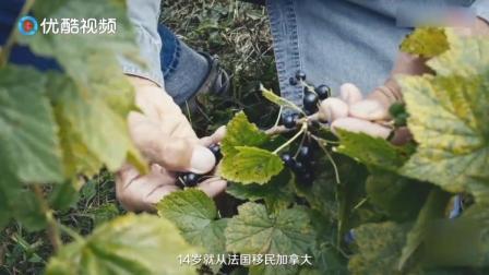 酒庄主人十四岁就从法国移民到加拿大,花二十年时间种植黑加仑