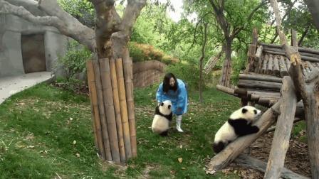 熊猫宝宝吃醋, 缠着奶妈就是不放, 这醋吃起来谁都没办法