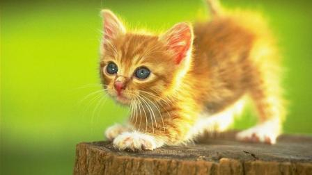 学猫叫--我们一起学猫叫, 喵喵喵。。。。
