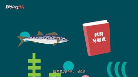 秒懂少儿之动物小科普 金枪鱼和马鲛鱼的区别