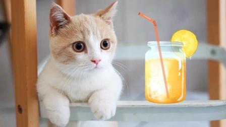 带猫咪喝下午茶, 吸引了全店小姐姐的注意! 店长: 你啥时候再来?