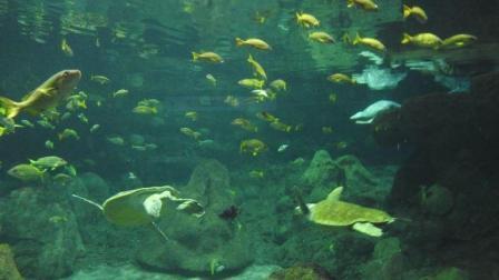 圣地亚哥海洋世界游览