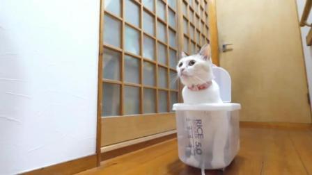 猫咪看到透明盒子, 喜欢的不得了, 蹲在里头2天不出来