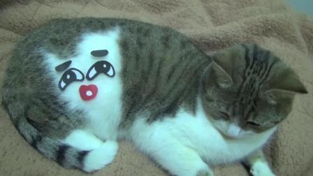 主人用表情包戏弄猫咪, 猫咪: 铲屎的, 你能不能像我一样成熟点!