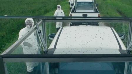 科学家把蚊子放生野外, 结果蚊子飞到市区, 引发了一场传染病