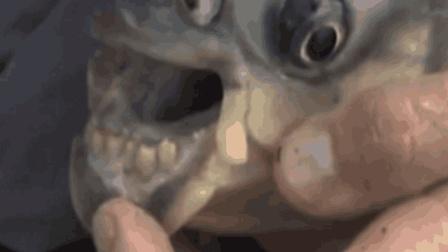 全世界最奇葩鱼, 最喜欢在水里袭击男性, 对女性丝毫不感兴趣