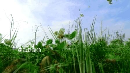 美丽七里 魅力七里 合阳新农村建设的名片