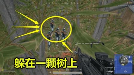 绝地求生: 当玩家躲在一颗树的顶部, 就像隐身了一样, 没人看的见